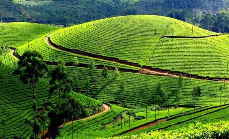 Araku Valley Tour Packages