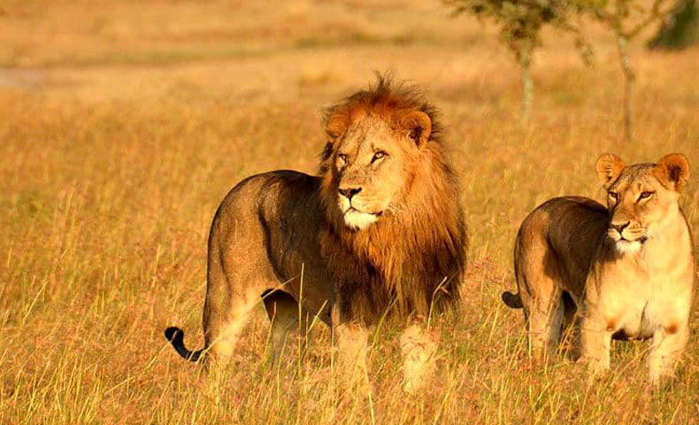 Gujarat Wildlife Safari Tour Packages